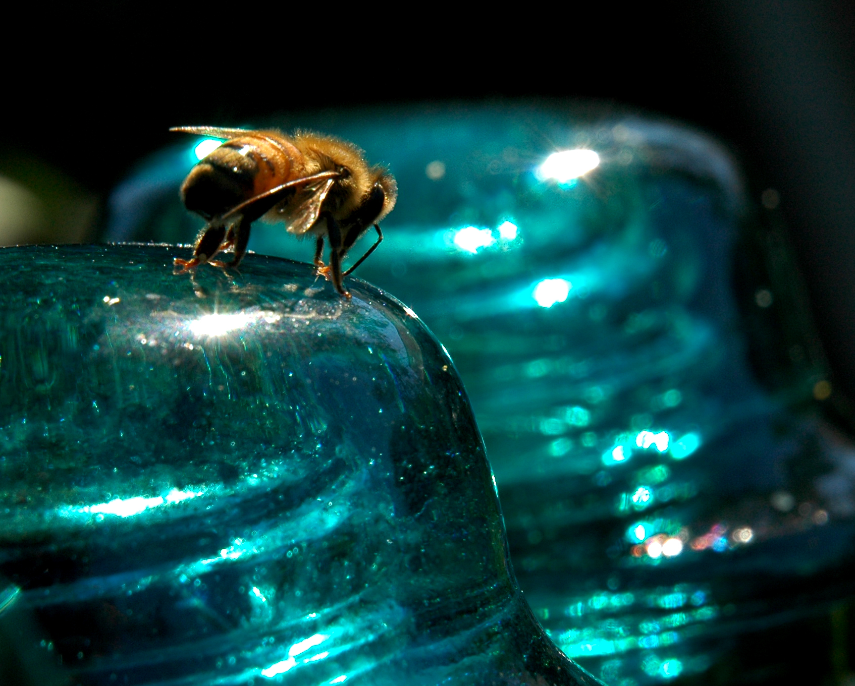 What Do Bees From Drink Sugar Water