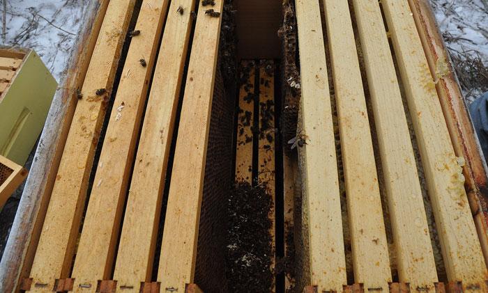 hive-gone-bad-003