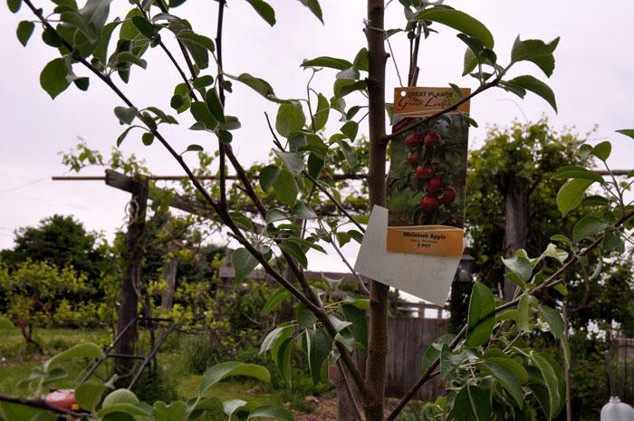 orchard-002