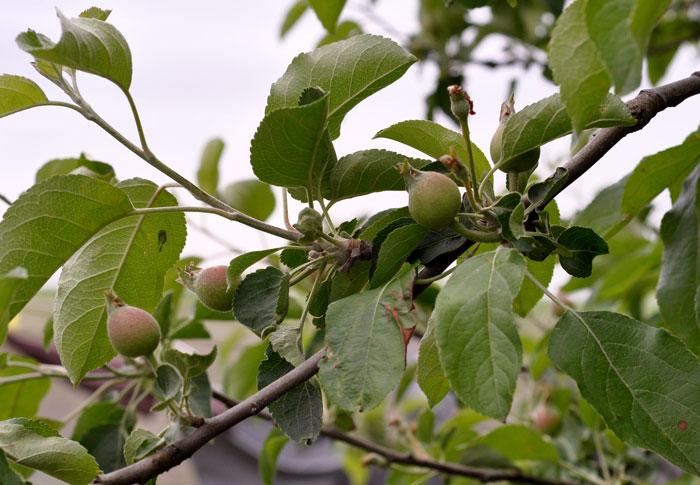orchard-015