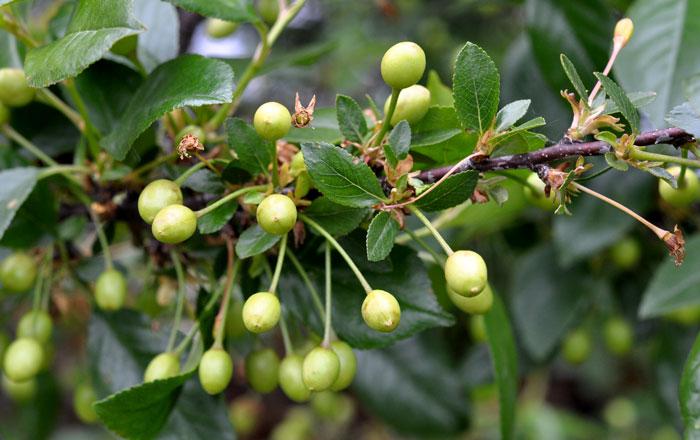 orchard-016