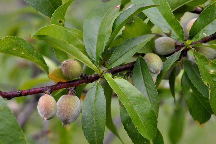 orchard-019