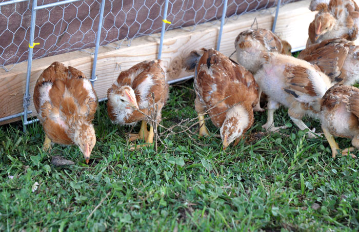 chicks-to-the-field-005