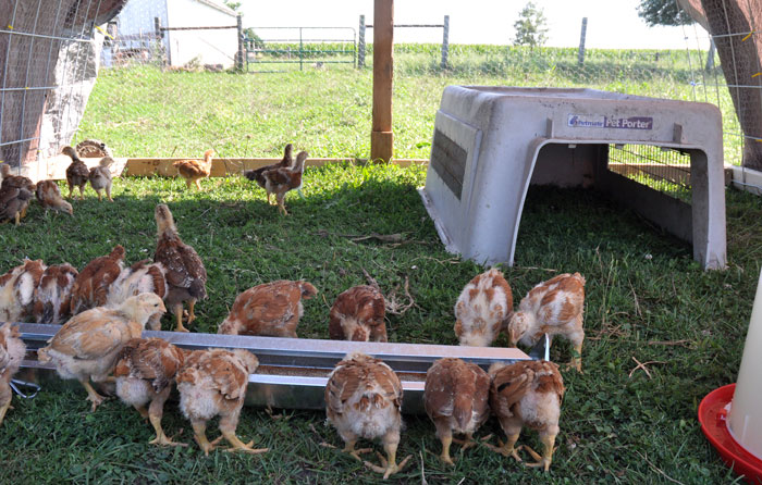 chicks-to-the-field-012