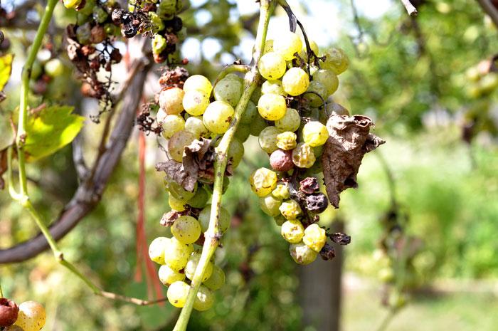 ladybird-wine-006