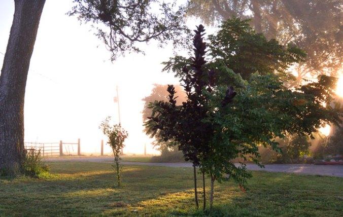 mist-025