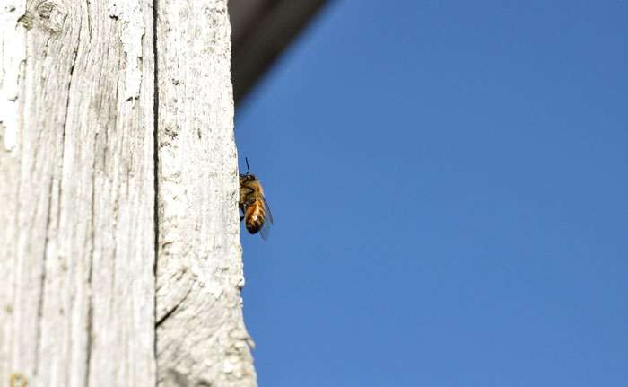 bees-057