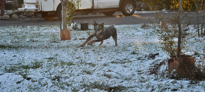snow3-033