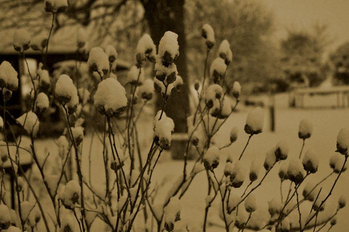 snow23-021