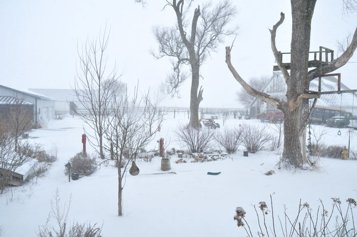 snow-three-037