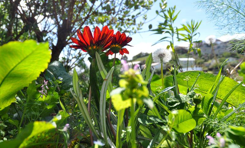 flowers-of-new-Zealand-010