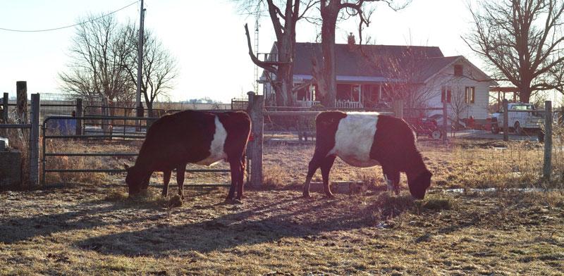 sunny-day-on-the-farm-030