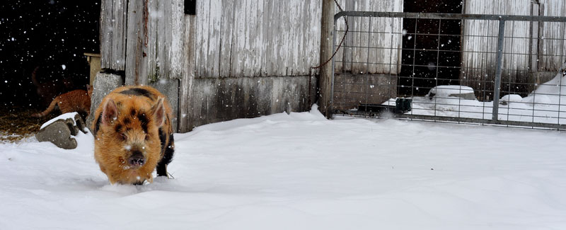 snow-march-006