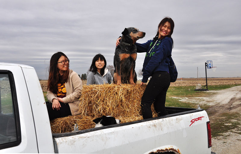 girls and dogs on truck