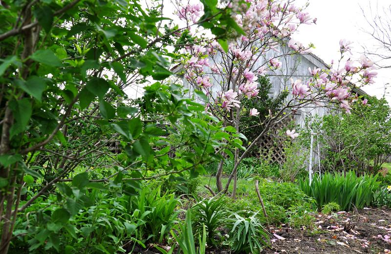 garden-004