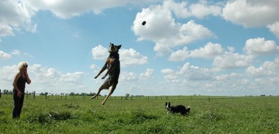 dog training5