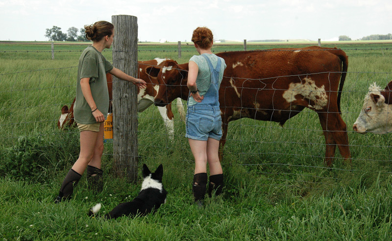 girls and cows
