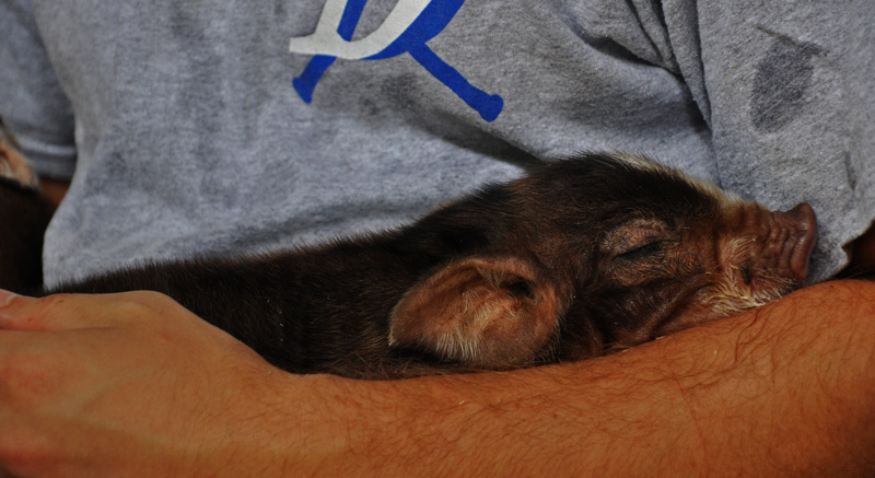 nick-and-piglet1