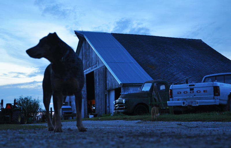 dog and barn