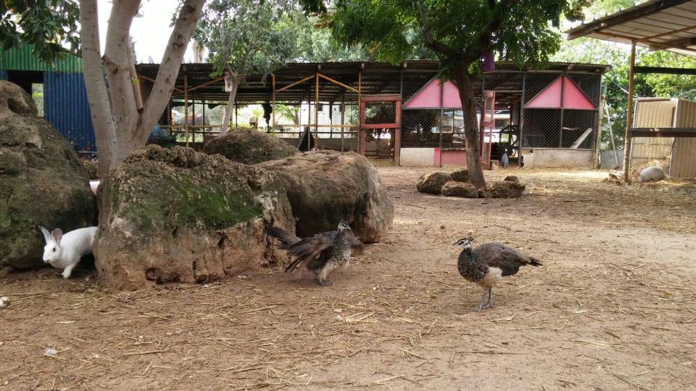 1-pet-zoo
