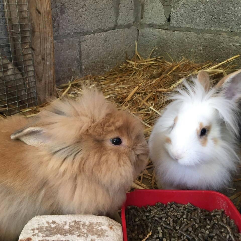 4-rabbits