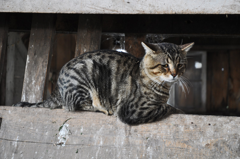 cats-in-barn-006
