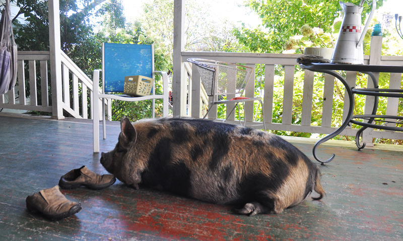 pig-on-the-porch-004