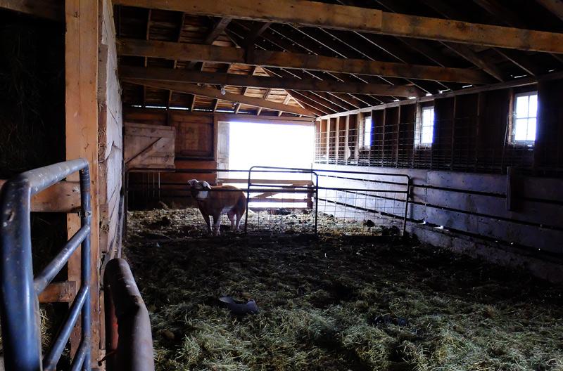 farm-006