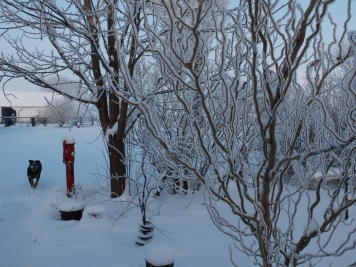 snowy-017