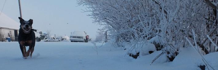 snowy-023