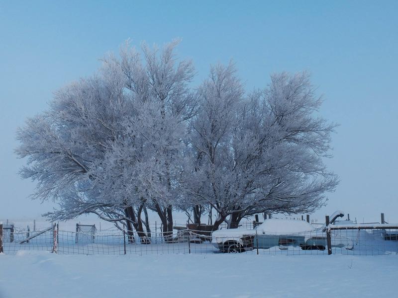 snowy-056