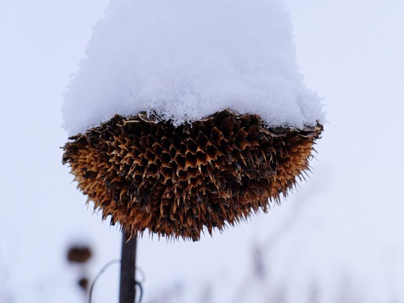 snowy-143
